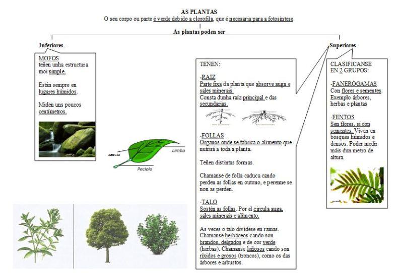 esquema-las-plantas-1-quinto-blogpte-y-acabar-el-2