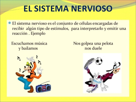 sistema-nervioso-para-5-y-6-de-primaria-2013-2-638